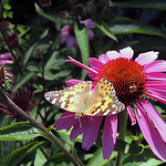 Butterfly | Bar Harbor, Maine