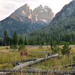Grazing Deer | Grand Teton National Park