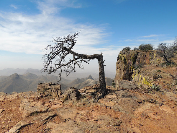 """""""The Way The WInd Blows""""   Big Bend National Park"""