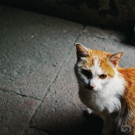 Cat in Shanghai
