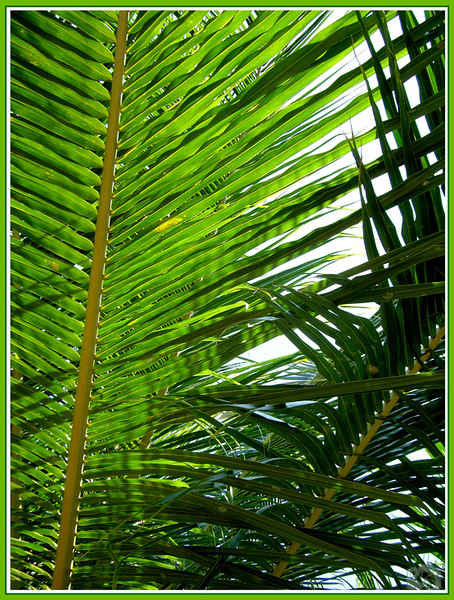 Palm tree at Punta Cana