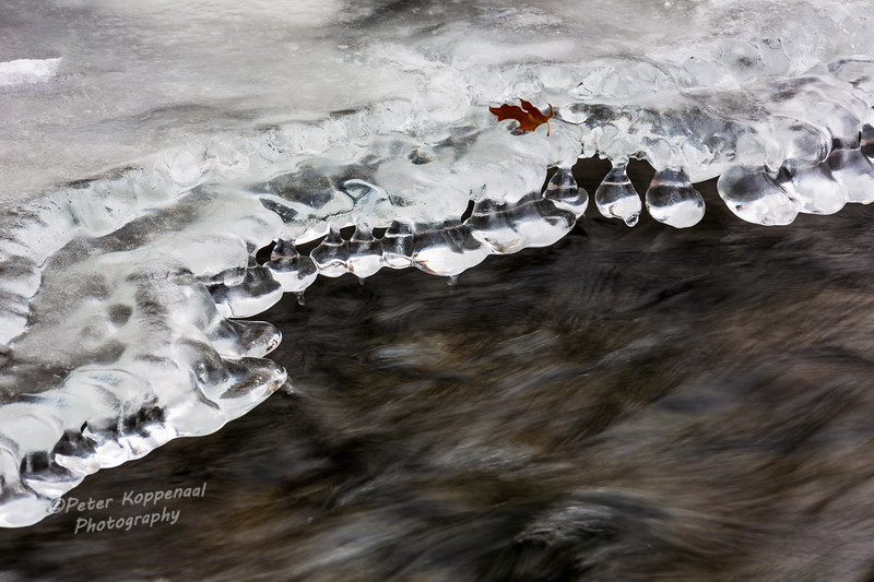 River Ice & Leaf
