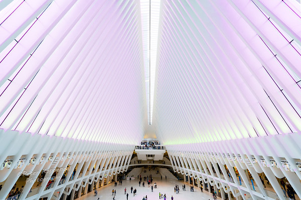 The Oculus, in Pink