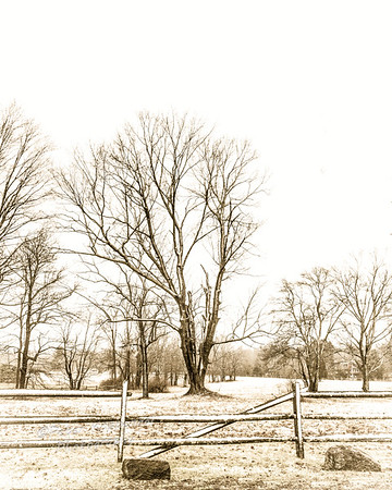 Farm Field in Snow Flurry II