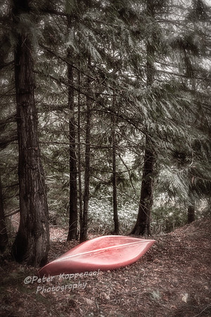 Canoe in Pine Forest, Wash