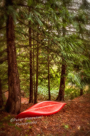 Canoe in Pine Forest