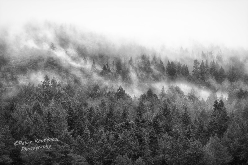 Trees in Mist, Black and White