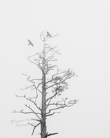 Birds, Tree in Mist