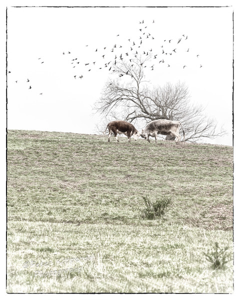 Bleach Horse w-Border II (CEP 4) (Soft Focus Ctl Pts on Birds+Tree