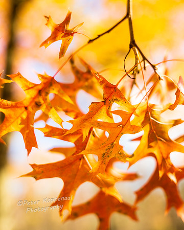 Fall Leaves II
