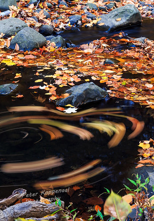 Swirling Fall Leaves II, South Mountain Reservation, New Jersey