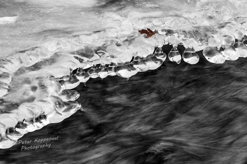 River Ice & Leaf, Black and white