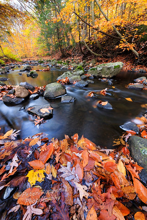 Stream in Fall II, South Mountain Reservation, New Jersey