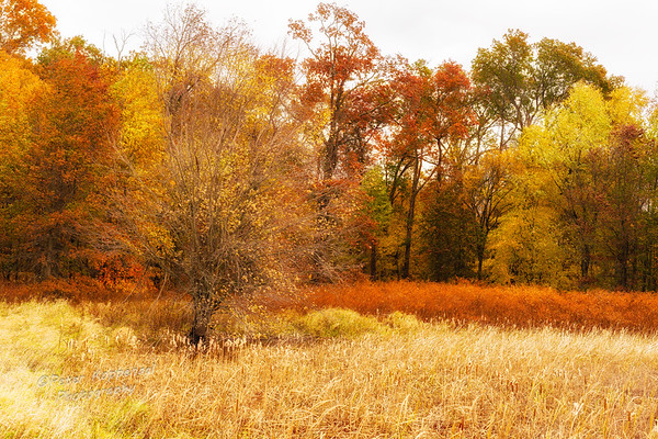 Fall Wetland Field