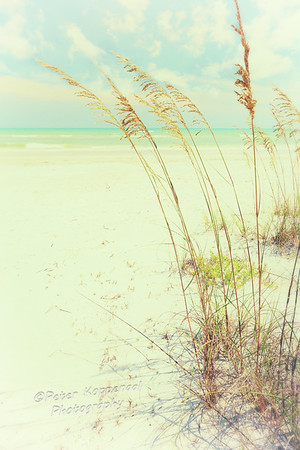 Vintage Sanibel Beach Grass