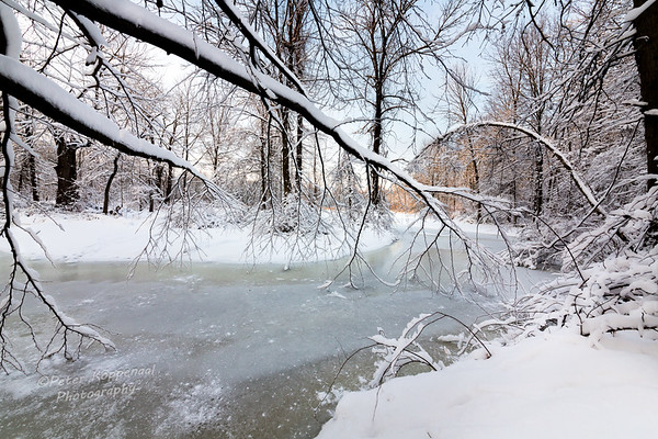 Branches over Frozen River
