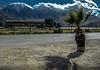 a_california_landscape_truck_032309_2