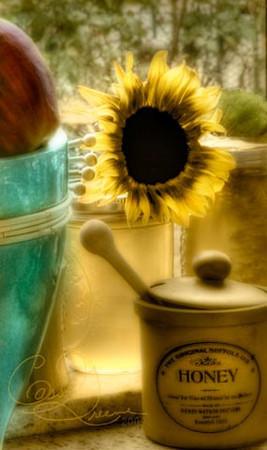 Sunflower window [2007.11.30]