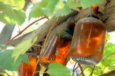 Old Jars at winery Rancho Bernardo
