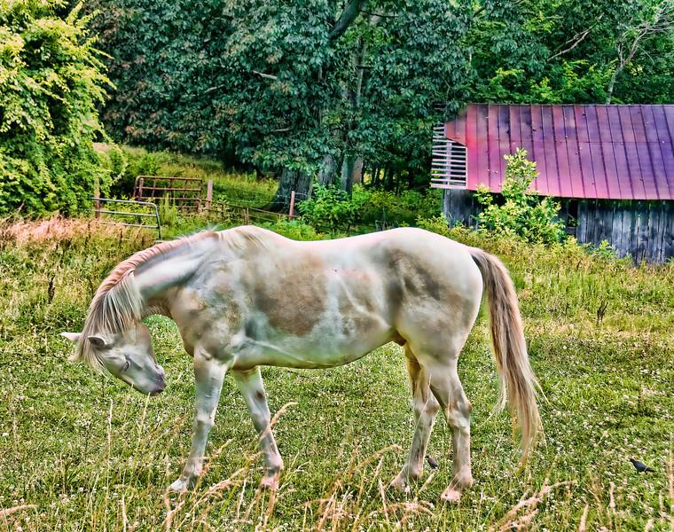 NC Horse  2010.6.22