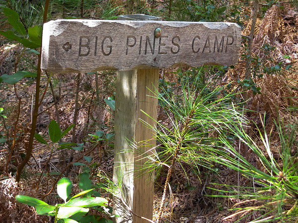 The camp is near -- and not ALL the pines are big.