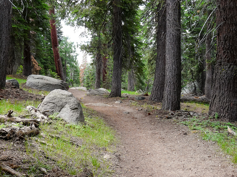Friday, July 16.  In through a mostly open fir forest.