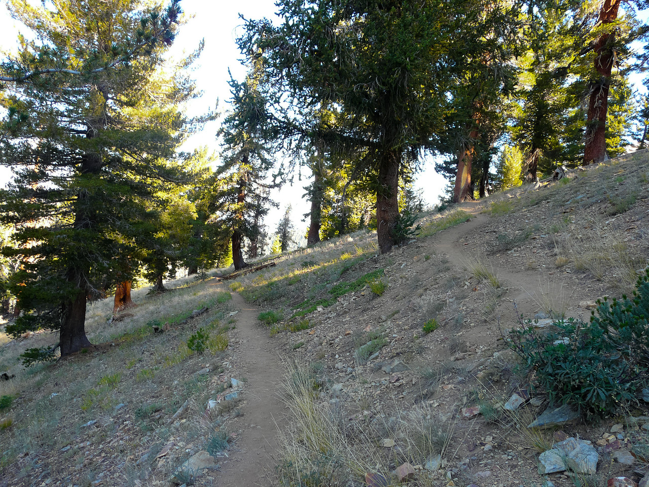 But after about 3/4 mile, it was all open hillside.
