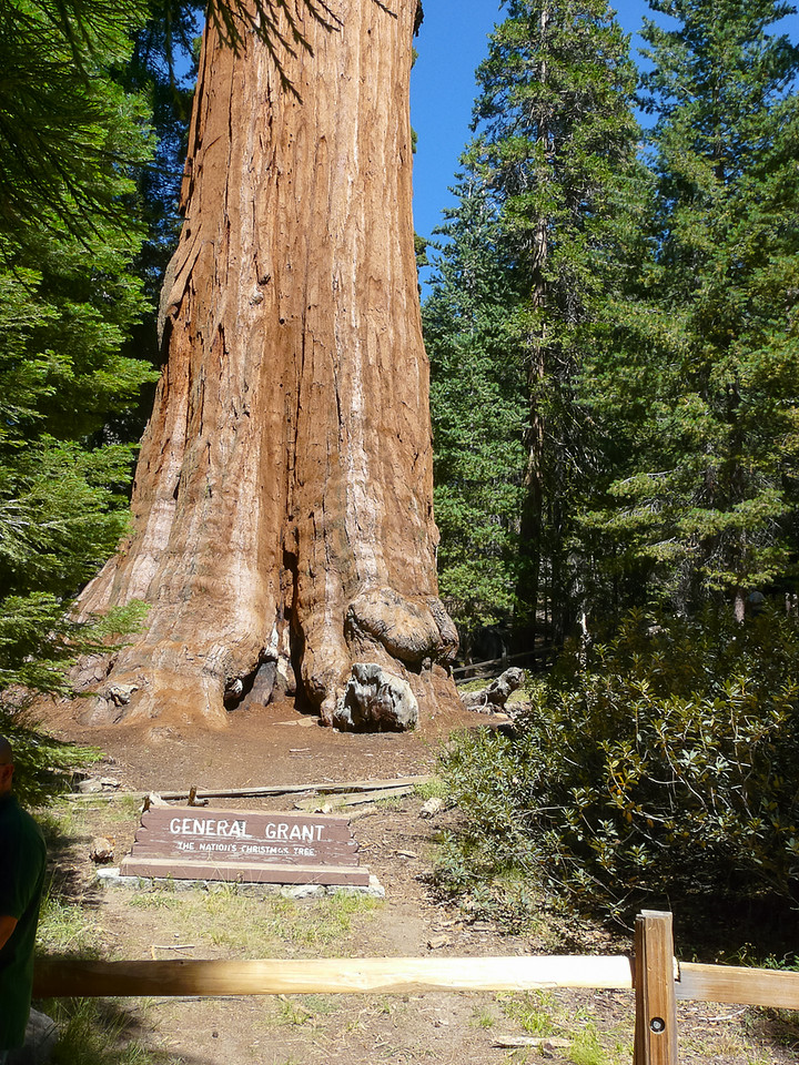 First stop was the Grant Grove.  General Grant is the widest sequoia and number 3 in volume.