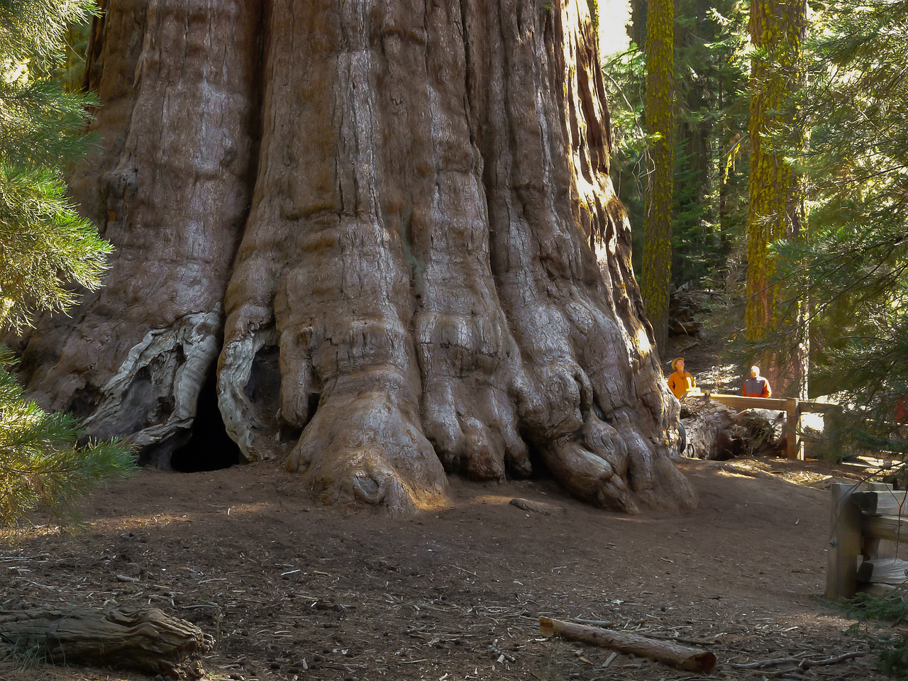 It's hard to capture the scale of this thing.  By volume, the Sherman Tree is the largest tree in the world.