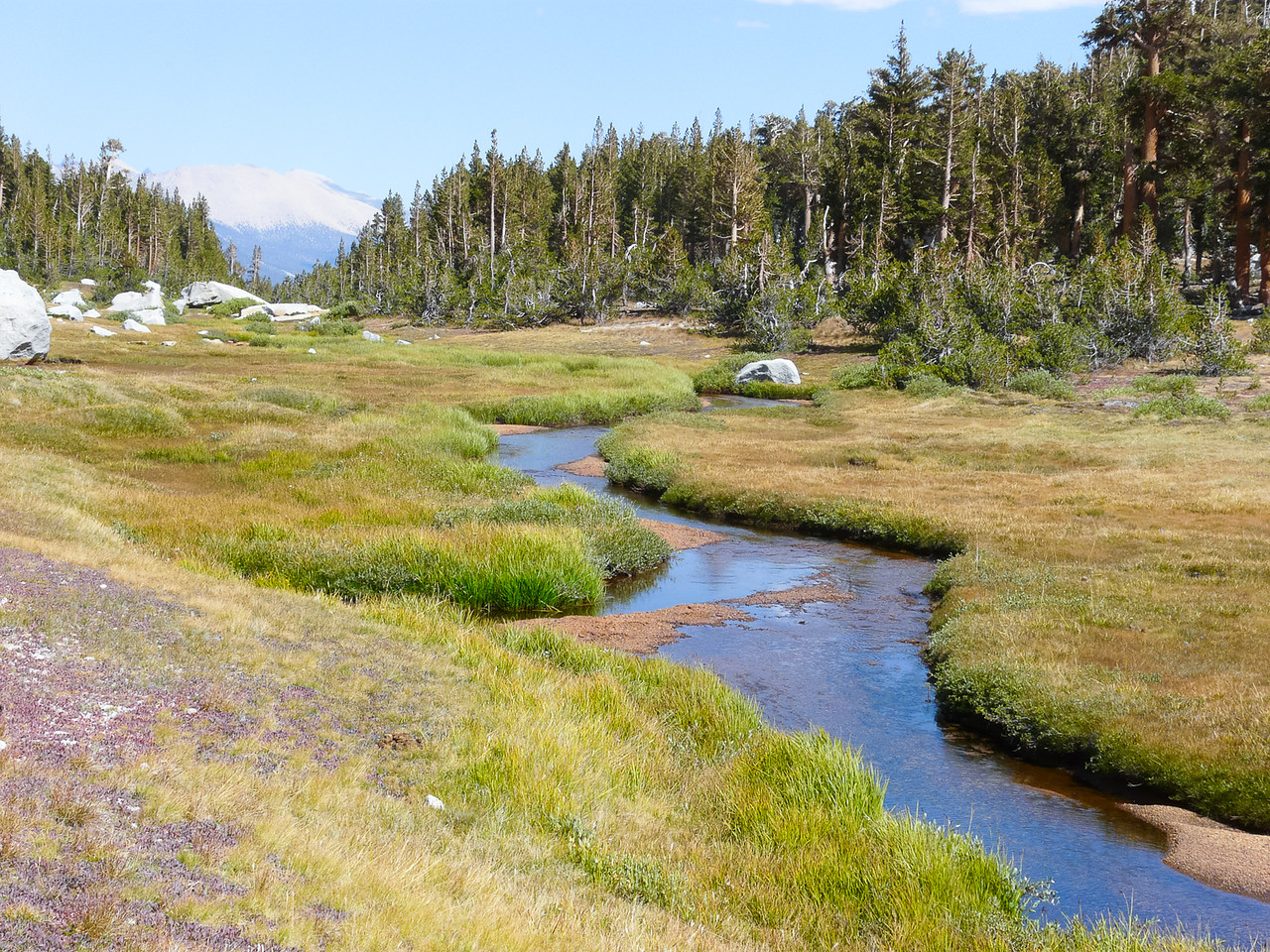 Lost Canyon Creek in the meadow, looking back.