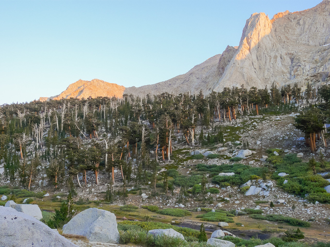 Foxtail pines -- live and dead -- on the sides of this meadowed canyon.  Dead foxtails can stand for centuries.