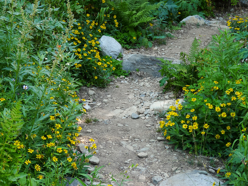 Daisies lining the trail as I descend.