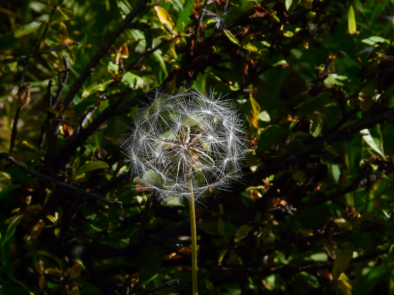 Wednesday, September 3.  Interesting seeds as I walk up Cliff Creek.