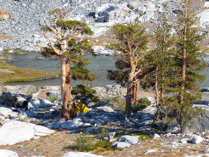 Camp today is on the highest of the Little Five Lakes.  I'm in a small clump of foxtail pines.