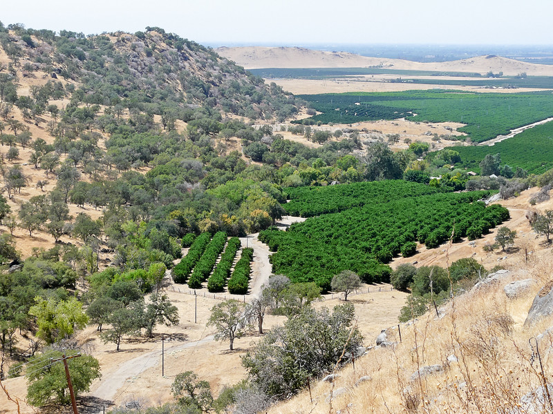 Sunday, August 31. Orange groves in the foothills of SR 180.  I remember these from the last time I was up this road ... in 1984!