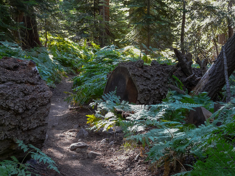 Day 2 - Saturday, September 5.   Up through the ferny white fir forest this morning.