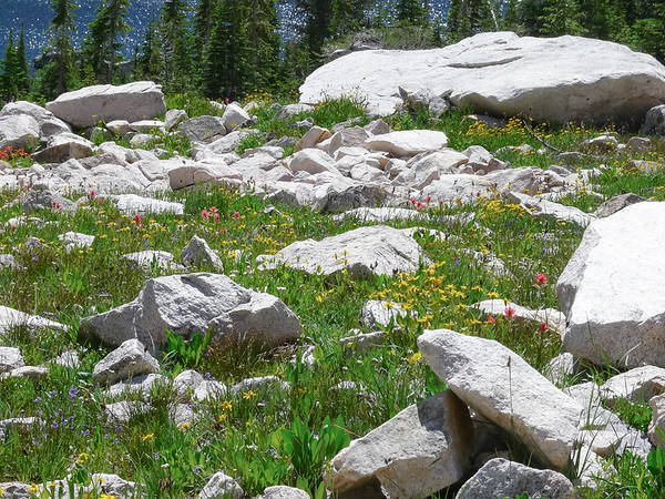 The rocky fields on the approach to Hidden Lake were full of flowers.  (Pikas nearby too.  No sightings, but lots of peeps.)