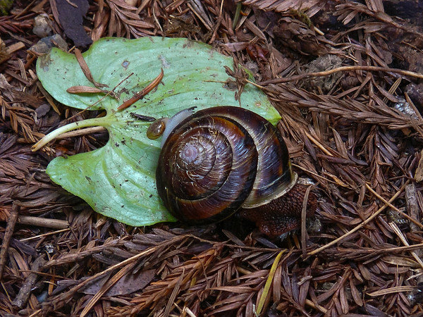Alex noted this snail's ancestors were NOT French.