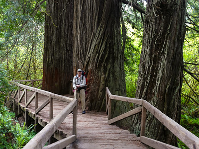 Prairie Cr Redwoods - June2011