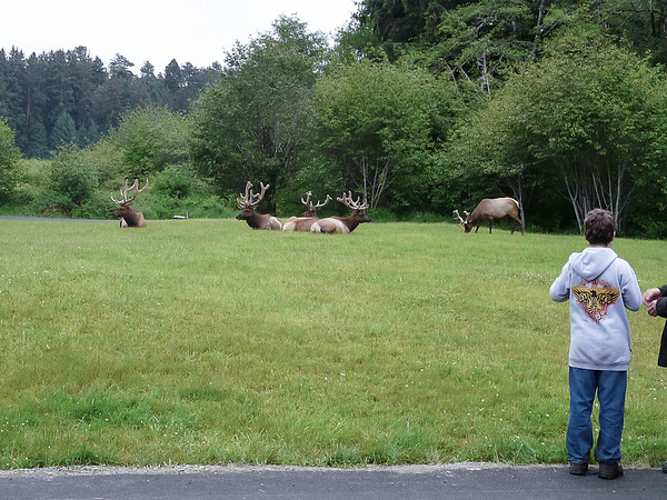 They were only 50-100' away from one of the campground roads.