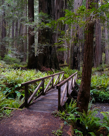 This bridge on a side trail led to the Carl Alwin Schenck grove.  Schenck founded the first school of forestry in US, in 1898.