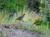 I saw lots of quail on this trip, but few posed for a picture.