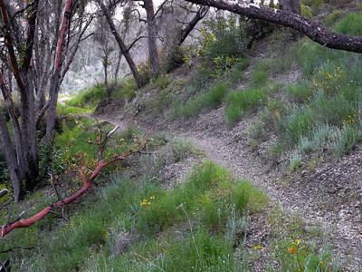 Ventana: Big Sur Trail Loop- May2011