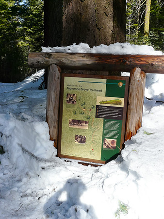 Stop #3 is the Tuolumne Grove  trailhead.  Maybe I can get to the big trees here.