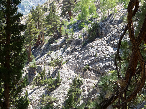 The canyon now narrows and the trail sometimes had to be chopped into the hillside.