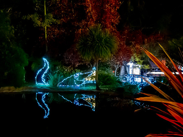 December 7 Zoolights - Colorful lights are scattered around elsewhere.