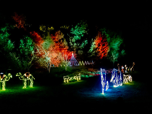 December 7 Zoolights - The Zoo puts on a fun show in the meadow.