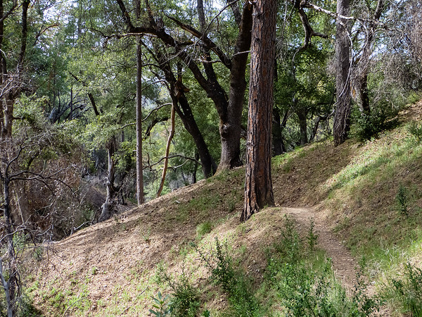 On the Carmel River Trail.