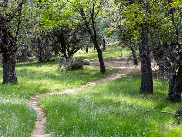 The Church Creek / Carmel River / Pine Ridge Trail junction.