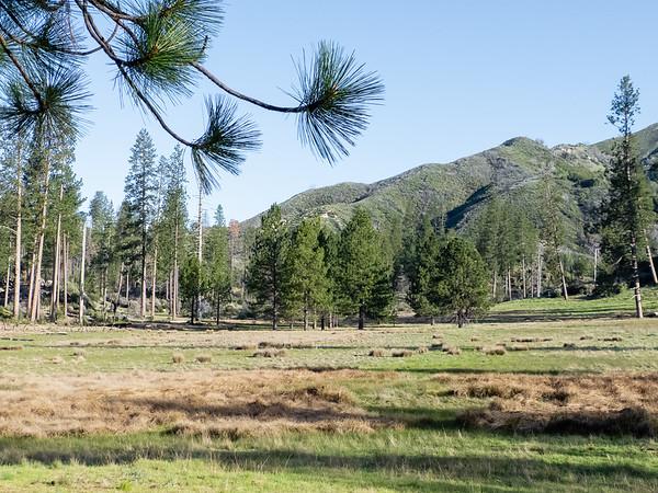 Pine Valley.